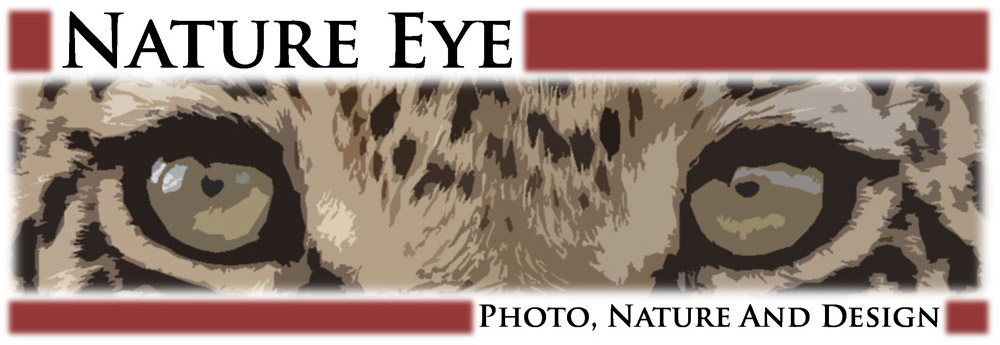 Nature Eye Logo